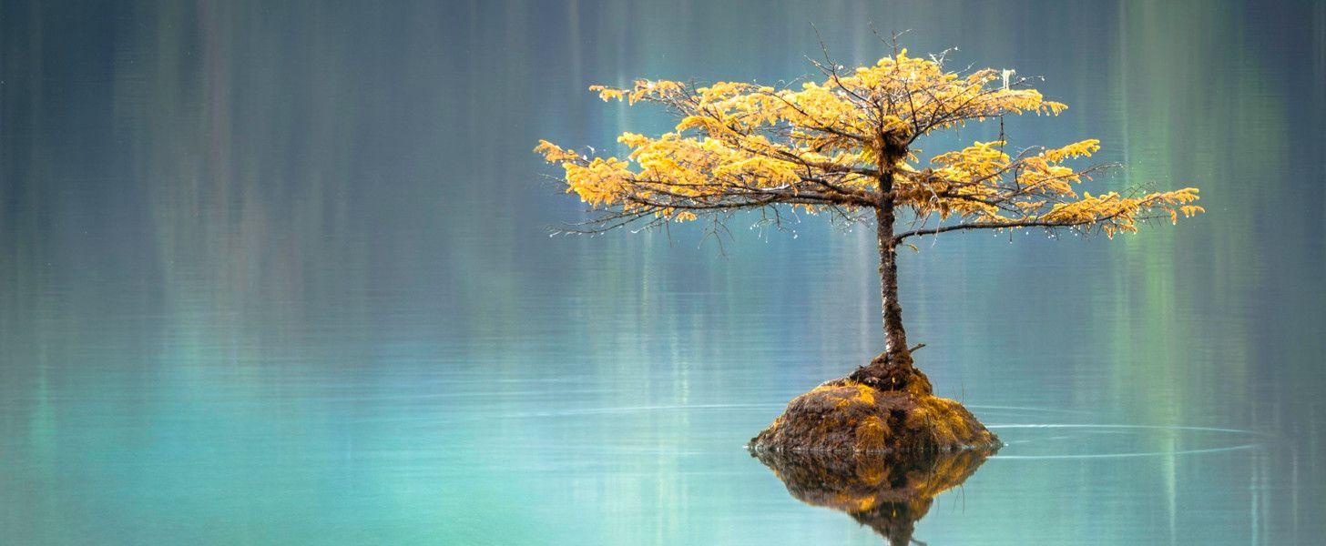 bonsai in lake
